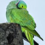 GaiaZOO - Vreemde Vogel Voliere