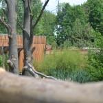 GaiaZOO - Nieuwe verblijf berberapen