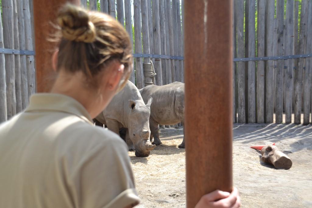 Observeren van de dieren