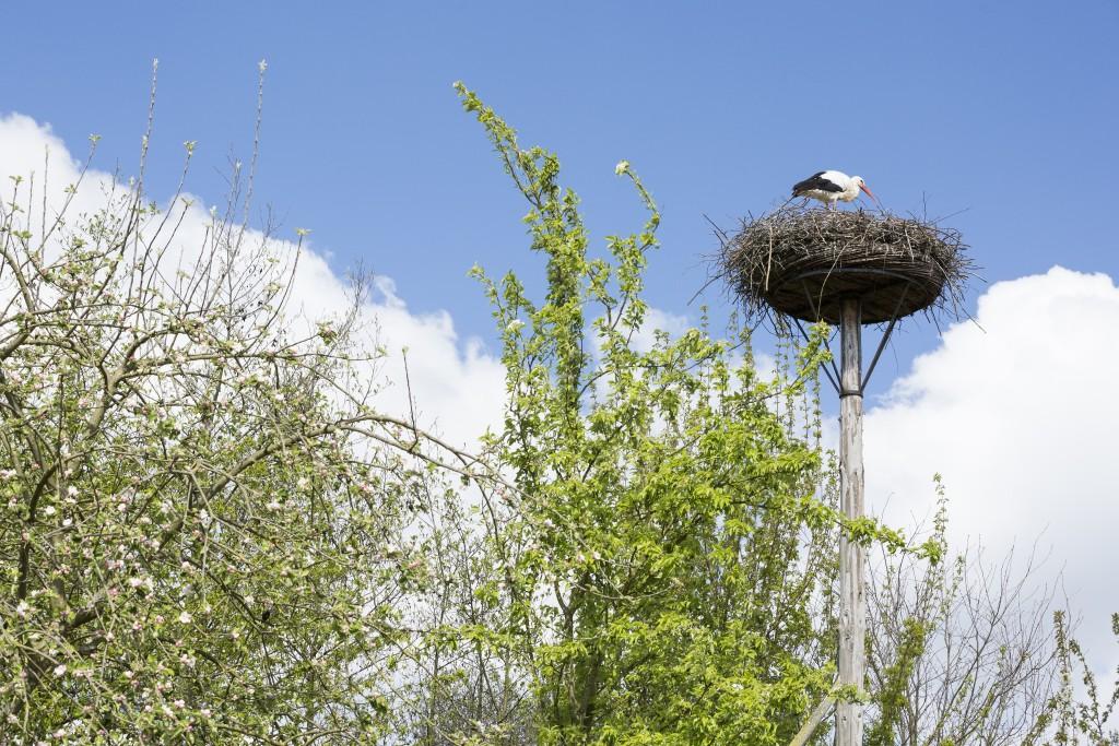 Lente in GaiaZOO