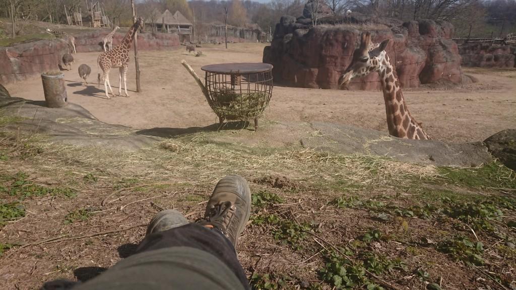 Pauzeren in een lege dierentuin